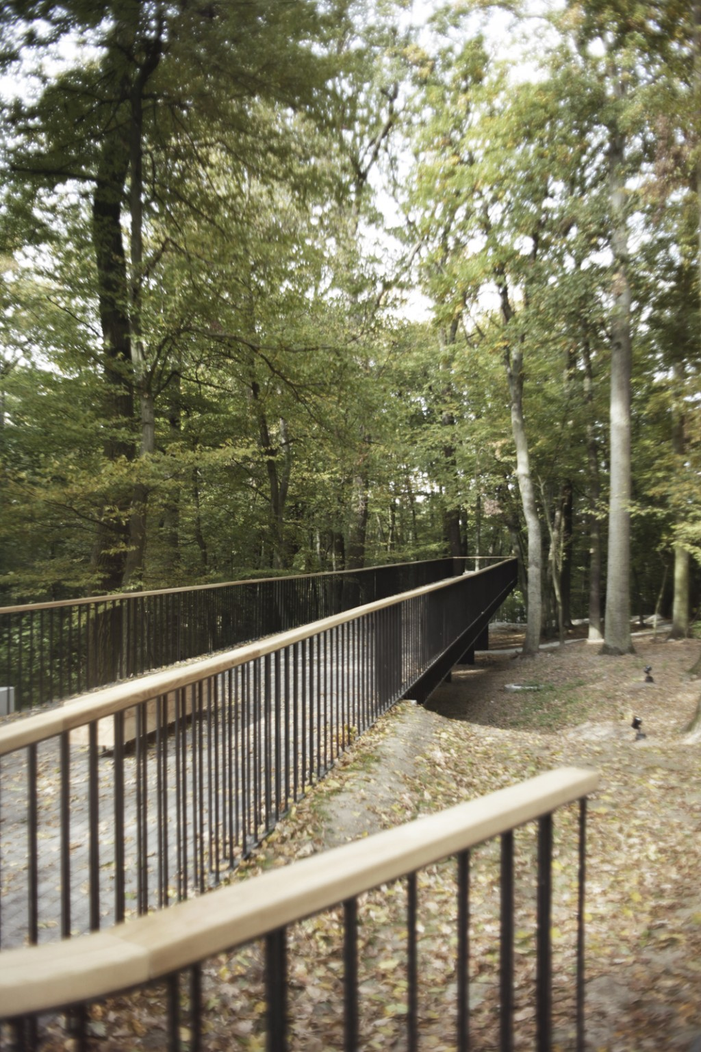 Pracownia Architektury Krajobrazu Las w Iławie